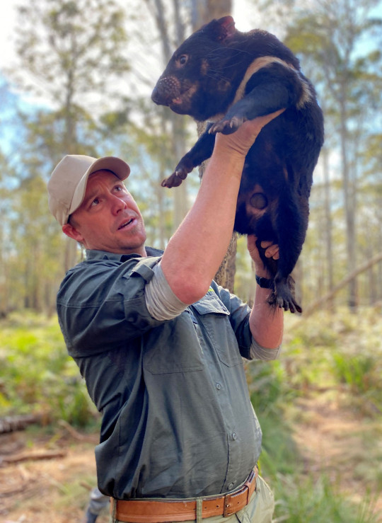 An undated handout photo received on May 25, 2021 from Aussie Ark shows Aussie Ark President Tim Faulkner holding a Tasmanian devil at the Barrington Tops Sanctuary, some 320 kilometres north of Sydney. - Tasmanian devils have been born in the wild on Australia's mainland 3,000 years after the marsupials disappeared from the continent, conservation groups said on May 25, 2021, raising hopes that a major rewilding effort could succeed. (Photo by - / Aussie Ark / AFP) / ----EDITORS NOTE ----RESTRICTED TO EDITORIAL USE MANDATORY CREDIT