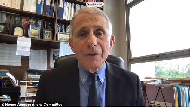 Fauci admitted there are concerns if less experience scientists perform the experiments, but said a pandemic is most likely to occur 'in nature'. Pictured: Fauci appears before a House committee to discuss the budget