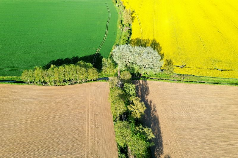 EU to finalise huge farm policy overhaul; climate groups cry foul