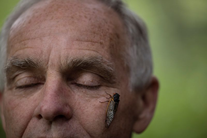 Getting up close with cicadas to find climate change clues
