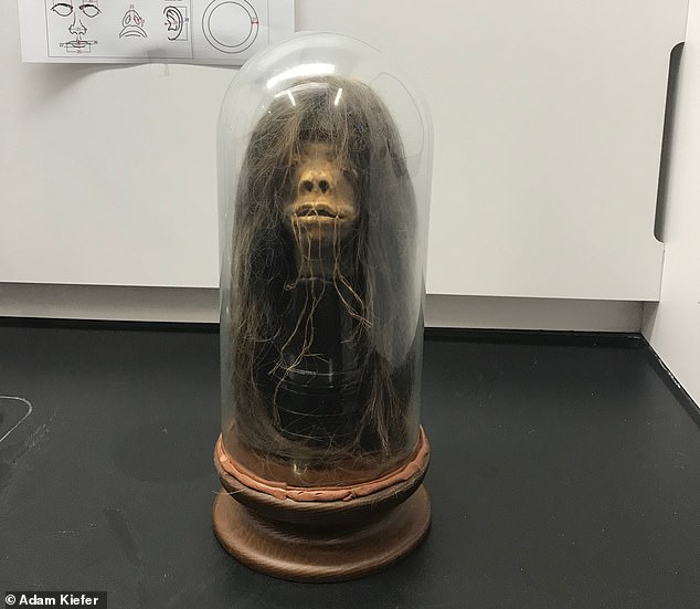 A bizarre shrunken head (pictured) once used as part of a grisly film prop has been confirmed to a real 'ceremonial tsantsa' ¿ and repatriated to Ecuador, where it was made