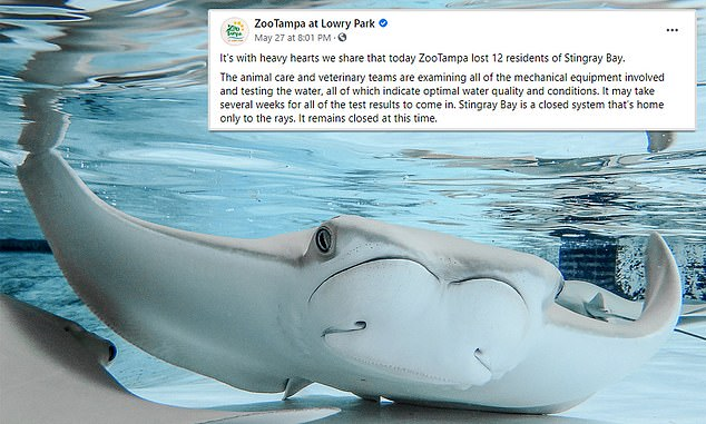 The zoo's Facebook post about the stingrays' deaths received more than 5,500 reactions and 860 comments