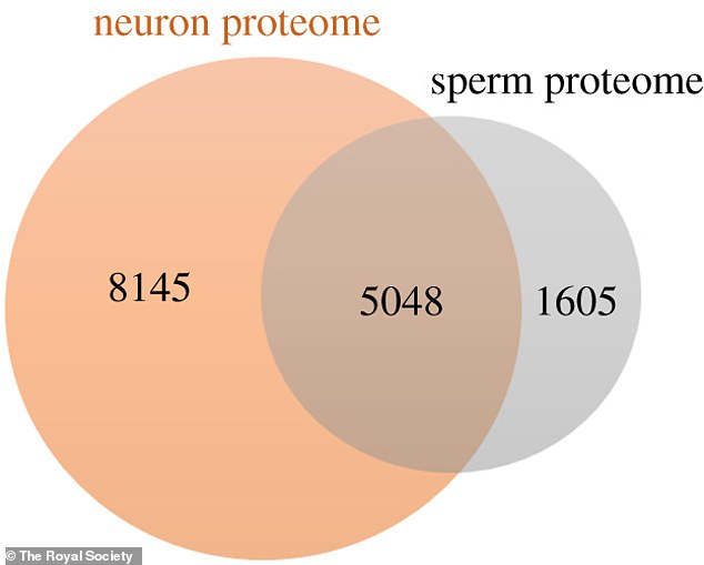 The team ultimately identified 5,048 common proteins in human neurons and sperm
