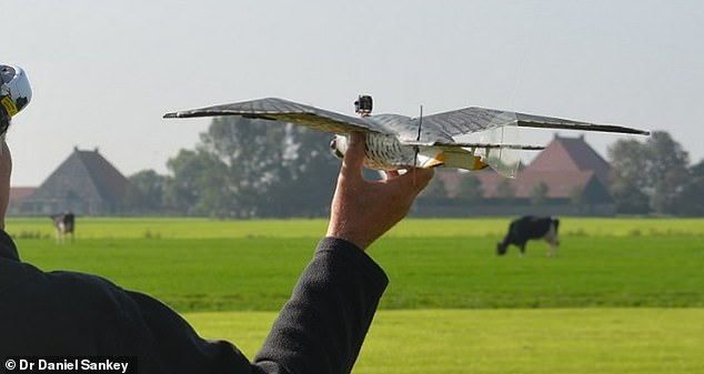 The study authors used a robotic peregrine falcon, known as RoboFalcon (pictured) for their experiments