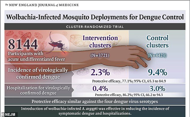 More than 8,000 residents were tested in a total of 24 neighborhoods inYogyakarta, Java. Not only were dengue rates 77 percent lower in the areas where the infected mosquitos were infected, but cases requiring hospitalization were 86 percent lower