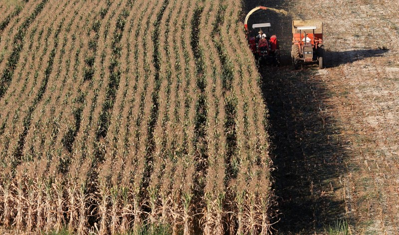 Crop Prices Plunge on Prospects of Better Weather Ahead for U.S.
