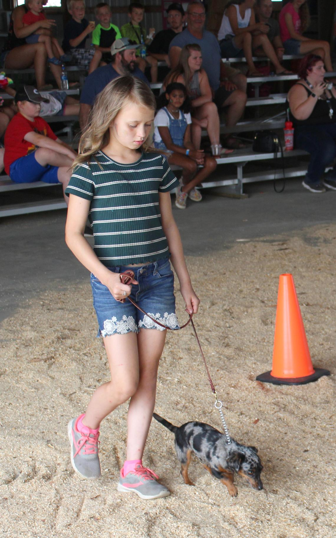 Elaina Doll walks her dog Zoe in the obedience segment of the 4-H dog show Saturday, July 17 at the Hubbard County Fair. (Robin Fish/Enterprise)