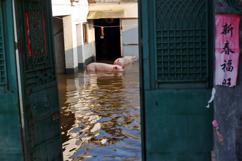 The sky has fallen': Chinese farmers see livelihoods washed away by floods
