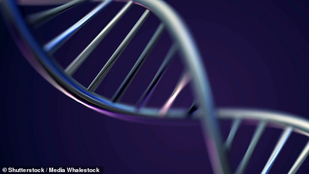 In mice, the researchers found two particular genes, Chek1 and Chek2, to affect fertility and reproductive lifespan (stock image)
