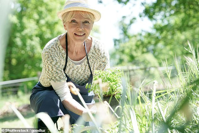 Popular hobby: Some 56 per cent of retired over-50s say they are prioritising gardening in old age