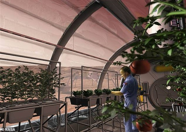 Elon Musk believes humans on Mars can cultivate food through hydroponics, or growing plants without soil. Pictured is a mock up of an astronaut using hydroponics to grow food on Mars