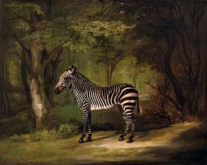 Zebra by George Stubbs.
