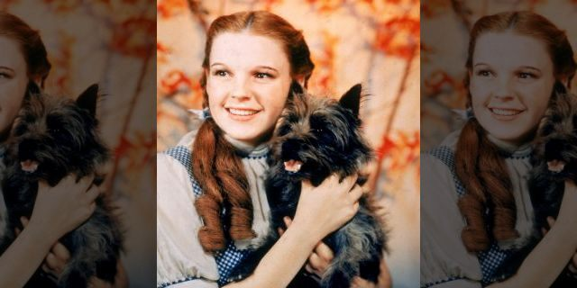 1939: American actor Judy Garland as Dorothy Gale, holding Toto the dog for the film, 'The Wizard Of Oz,' directed by Victor Fleming.
