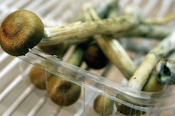 Magic Mushrooms sit in a fridge