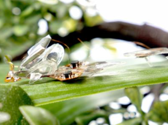 A view of the slightly terrifying robot insect (Image: EPFL)
