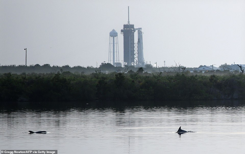 Dolphins swim in a lagoon near Launch Complex 39A at sunrise at Kennedy Space Center in Florida this morning. ElonMusk said they would be 'proceeding with countdown' despite a 50 per cent 'weather cancellation risk'