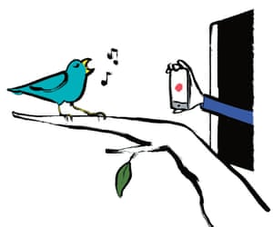Illustration of bird on tree outside window with someone holding a phone