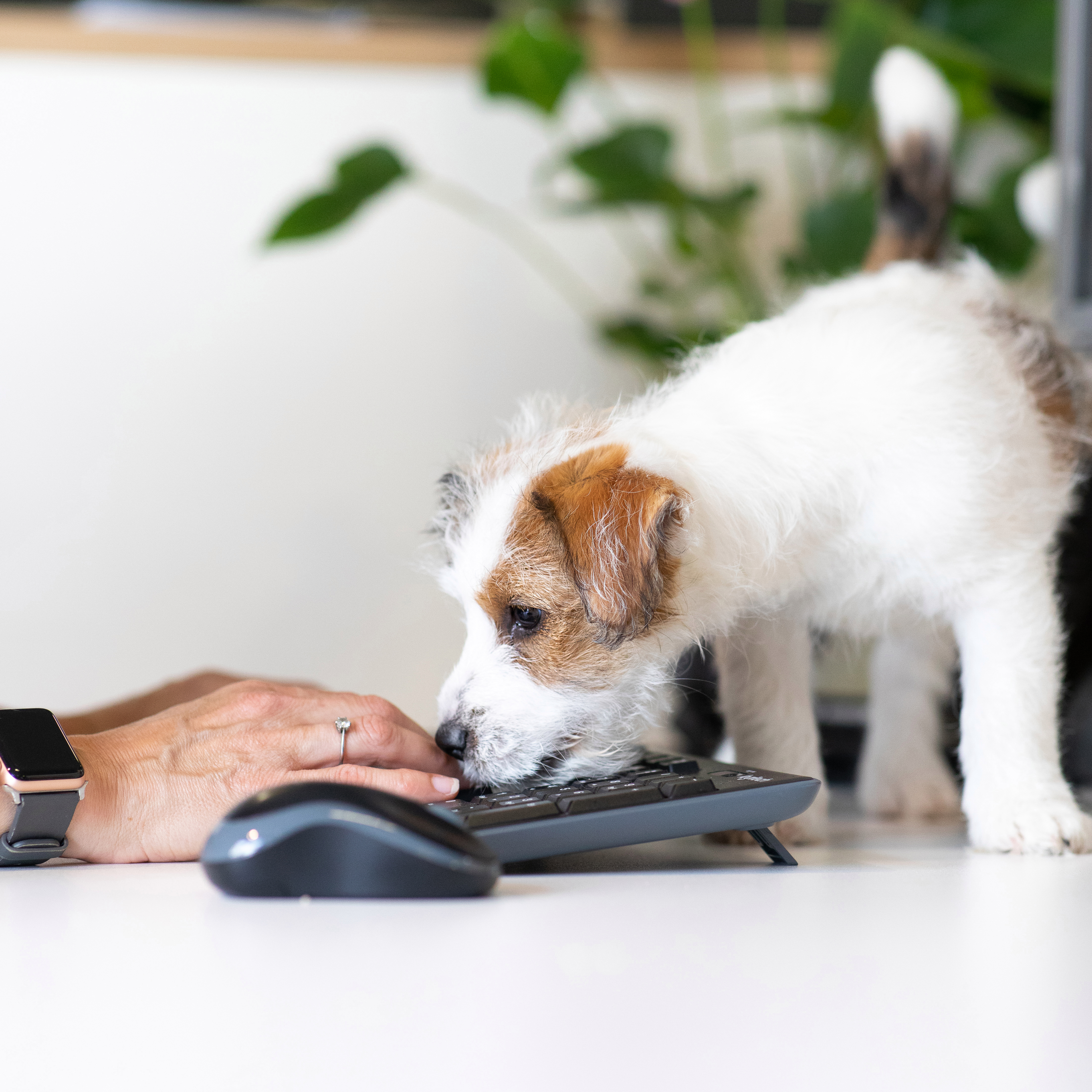 More offices will allow dogs as staff come back in after lockdown