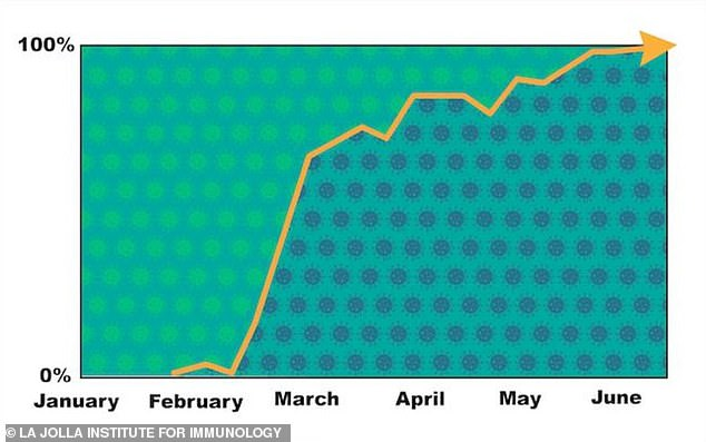 Researchers found the most dominant strain of the virus by mid-March was a mutation of the original variant called G614 (right, in blue), not the original virus D614 (left, in green)