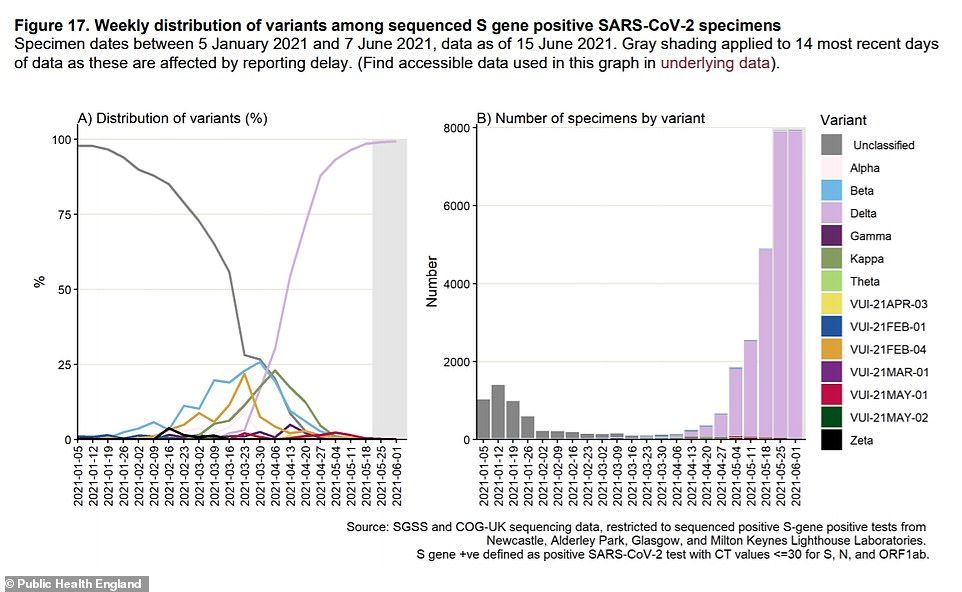 Graph left: A Public Health England report published today revealed the fast-spreading variant has now completely taken over in Britain and it makes up 99 per cent of cases. Graph right: Lab testing shows that the Delta variant (pink) has accounted for thousands of cases (specimens) in recent weeks and case numbers are soaring