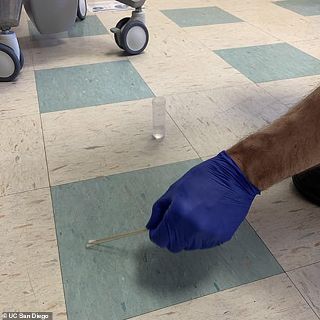 The coronavirus can survive on surfaces near hospital patients - but it is unlikely to infect anyone through those surfaces, a new study shows UC San Diego. Pictured: A researcher swabs the floor, looking for COVID samples