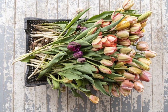 Top Reasons to Start a Flower Growing Business