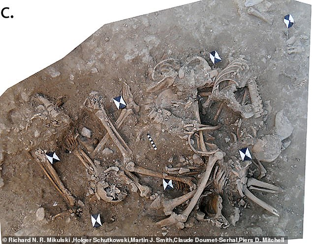 Archaeologists knew the remains belonged to Crusaders after discovering the European style belt buckles and a crusader coin within the graves
