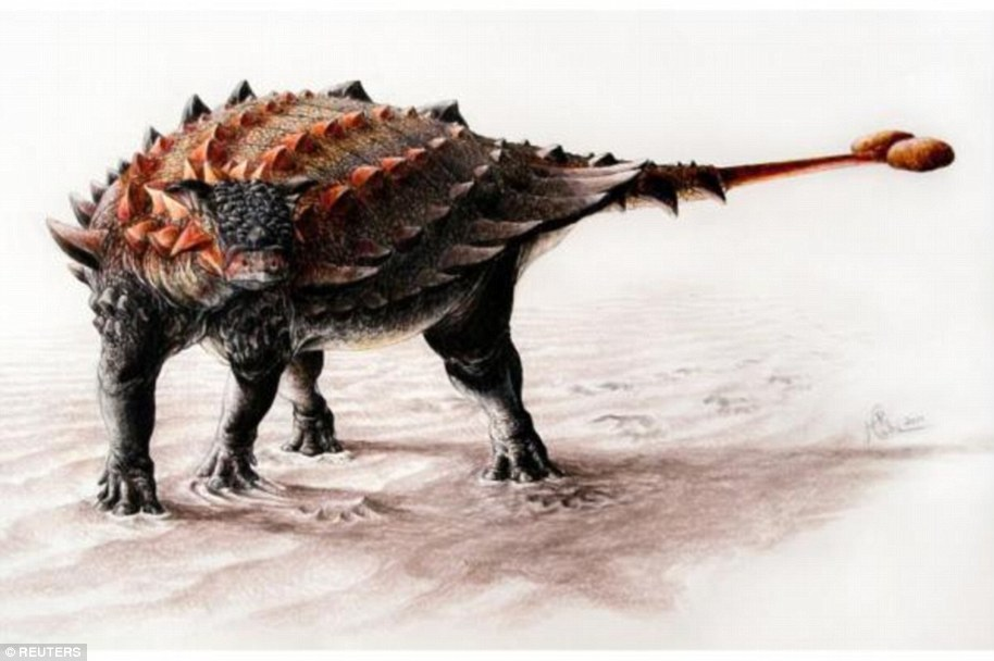 Ankylosaurs lived at a time when the largest land predators in Earth's history including T. rex roamed the landscape, dismembering other dinosaurs with powerful jaws and serrated teeth