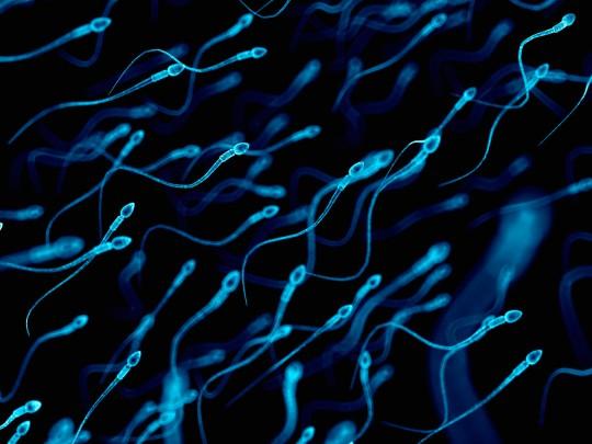 Human sperm, illustration.