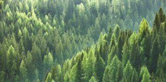 träd miljö