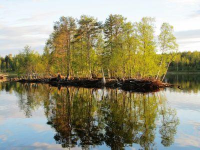 Furuörund 2012-06-18