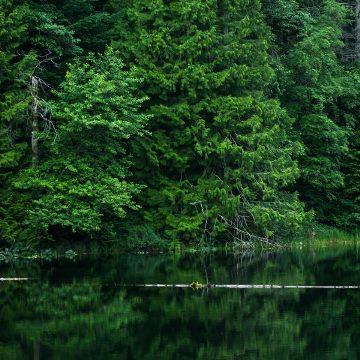Mindfulness ved skovsø