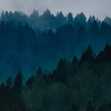 Mindfulness i skoven