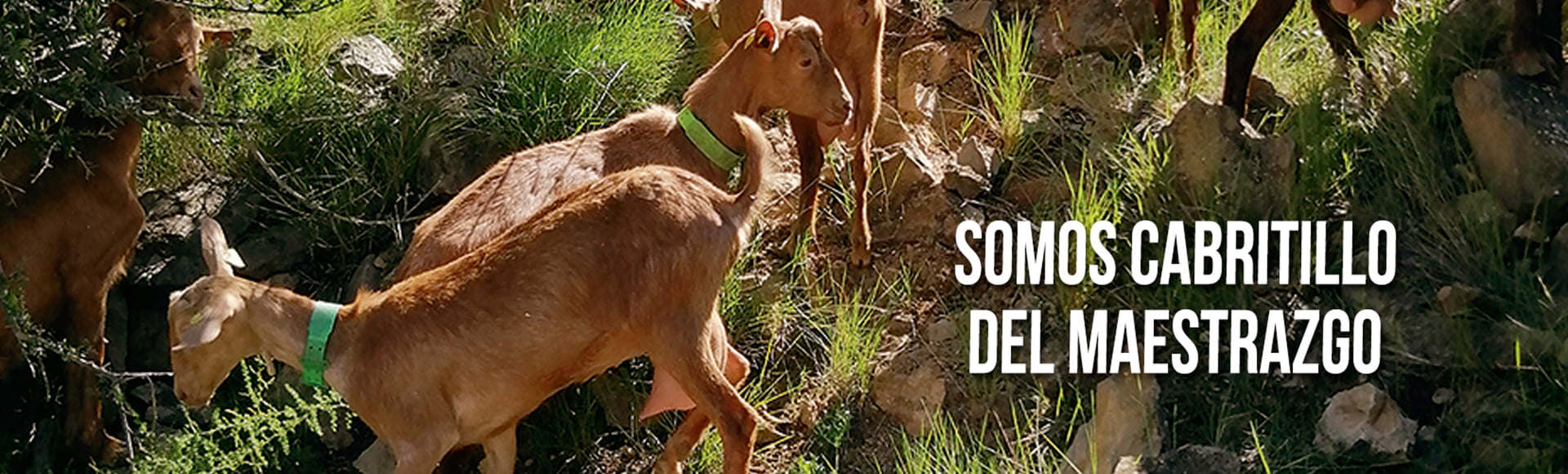 carne de cabrito sostenible