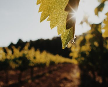 Vineyards of the Penedès