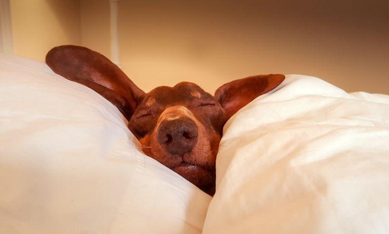 8 simple ways to sleep better