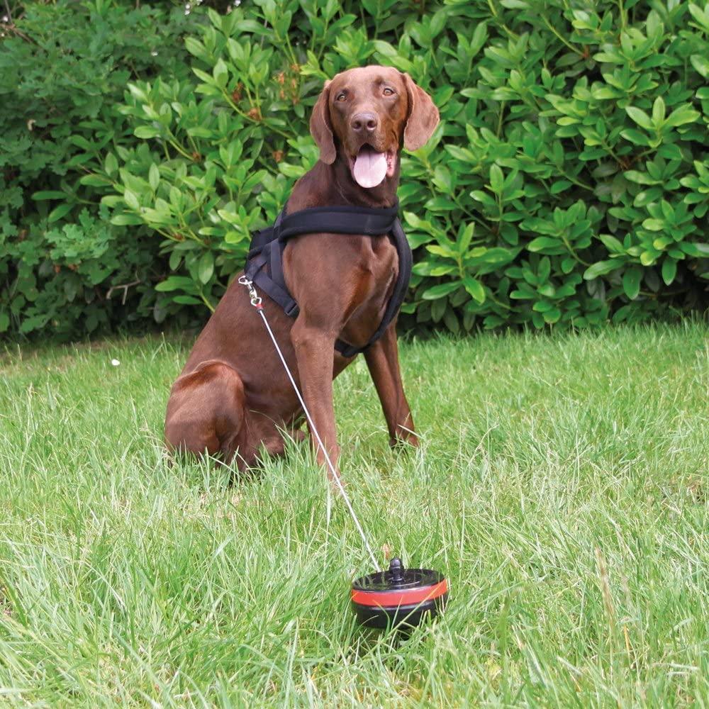 hond in het gras aan oprollijn