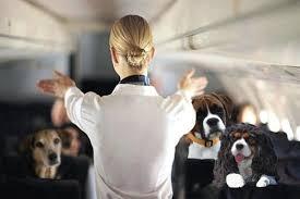 stewardess met honden in de cabine