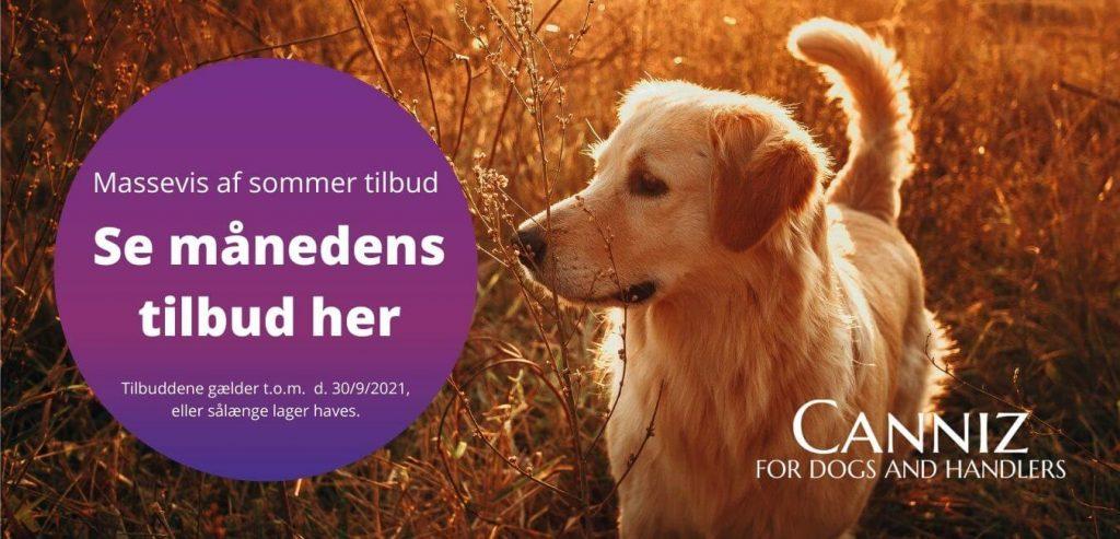 Tilbud på hundesnore, sporliner og meget mere til din hund