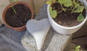 Läs mer om artikeln Vår i luften och dags för fröer