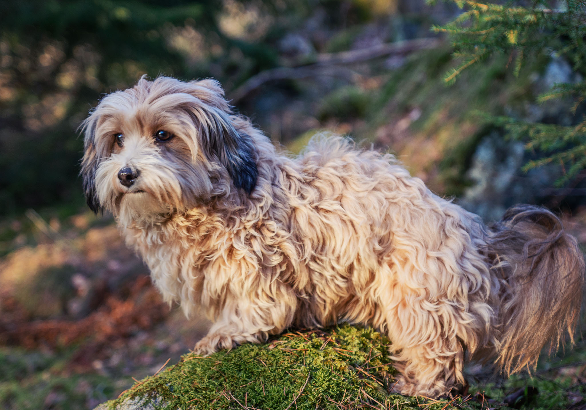 Husdjursfotografering