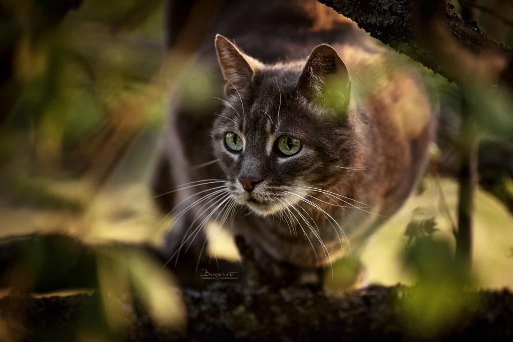 Katze auf der Lauer, Outdoor