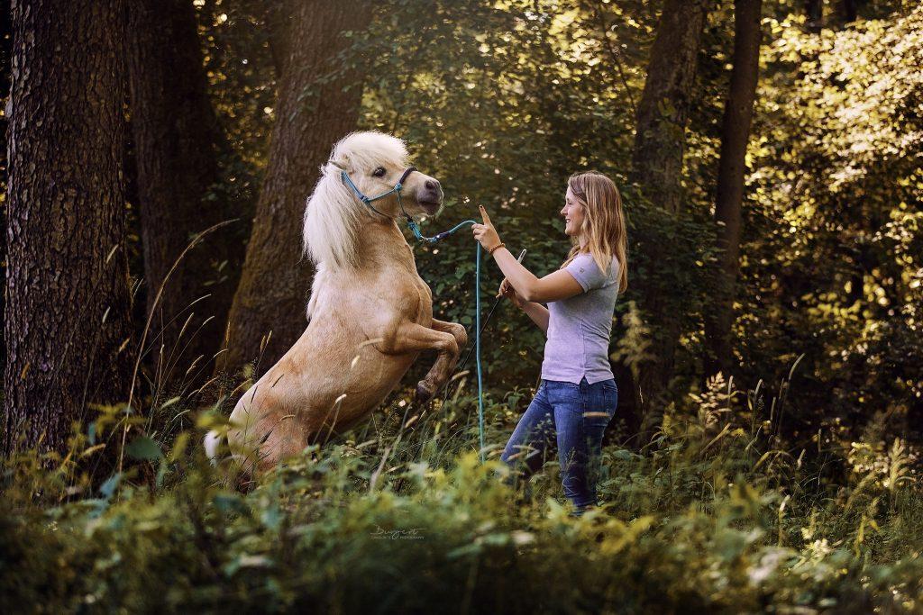 Steigendes Pony im Wald