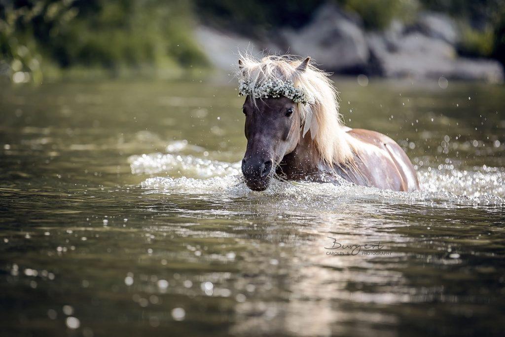Ein Wasserpferdchen