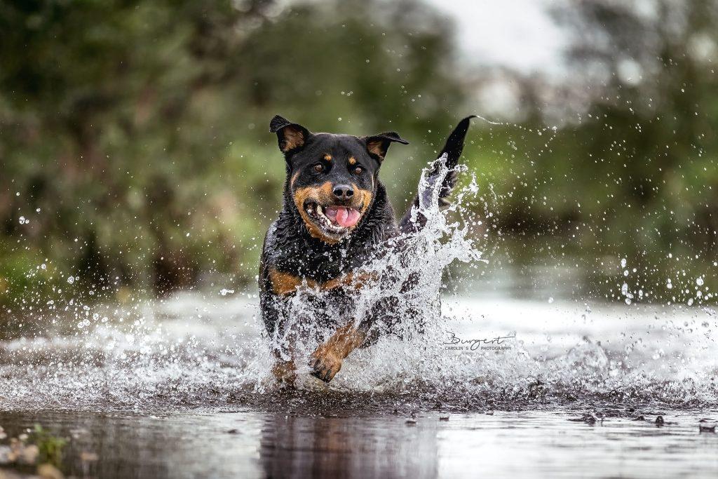 Amy liebt Action im Wasser
