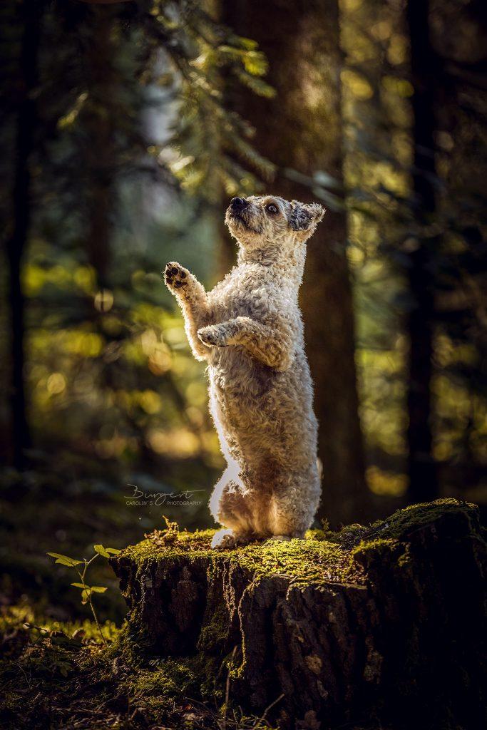 Bärchen im Zauberwald