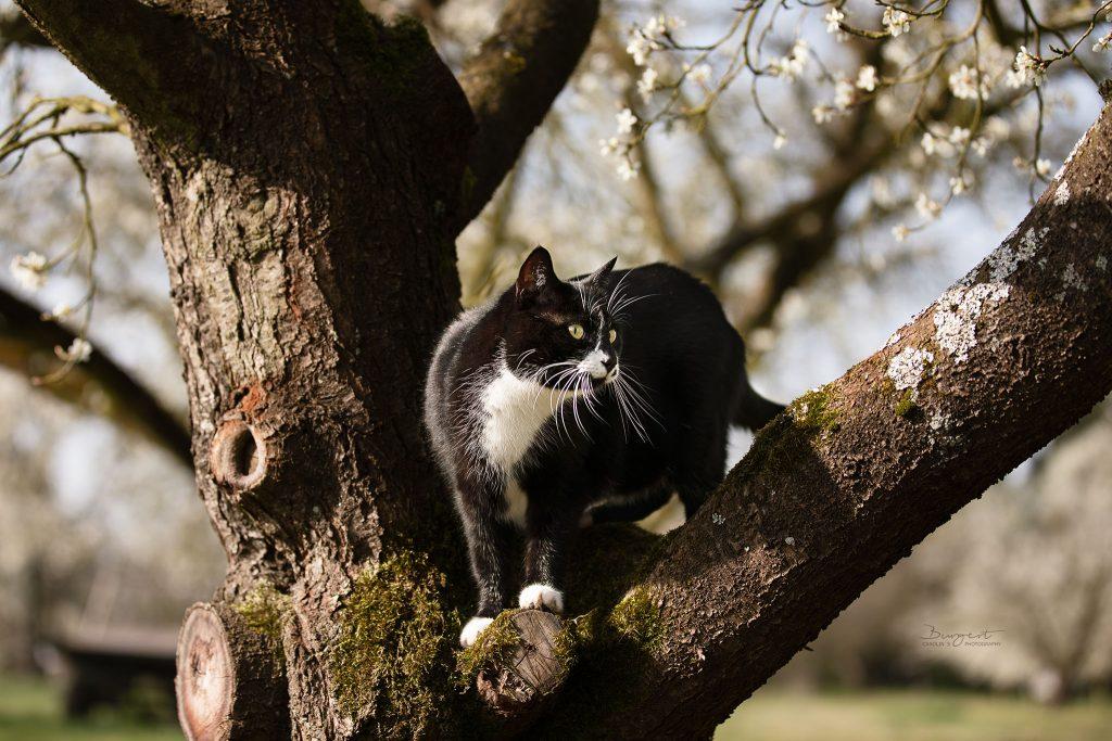 Katze im Frühling auf dem Baum