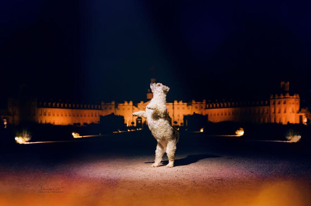 Schloss Karlsruhe, Stadtshooting, Havaneser Bichon Mix, Hundefotografie, Fotograf, Hundeshooting, Hund, Tiershooting, Ortenau, Baden-Baden, Achern, Renchen, Oberkirch, Rheinau, Bühl, Rastatt, Karlsruhe, Offenburg, Baden-Württemberg, Tierische Momente von Dauer, Carolin Burgert, schöne Bilder