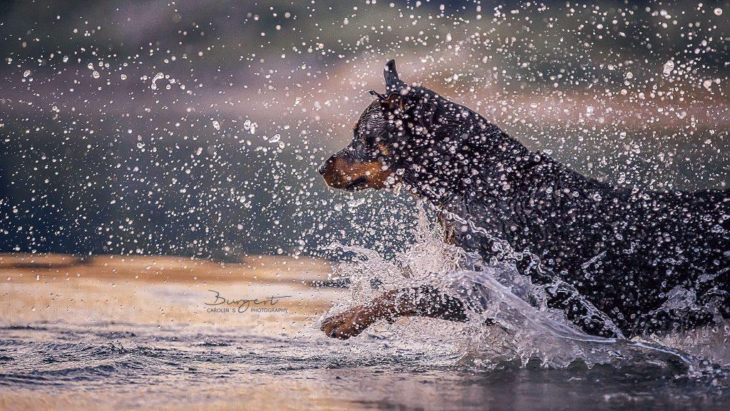 Geliebte Wasserratte - Herzenshund
