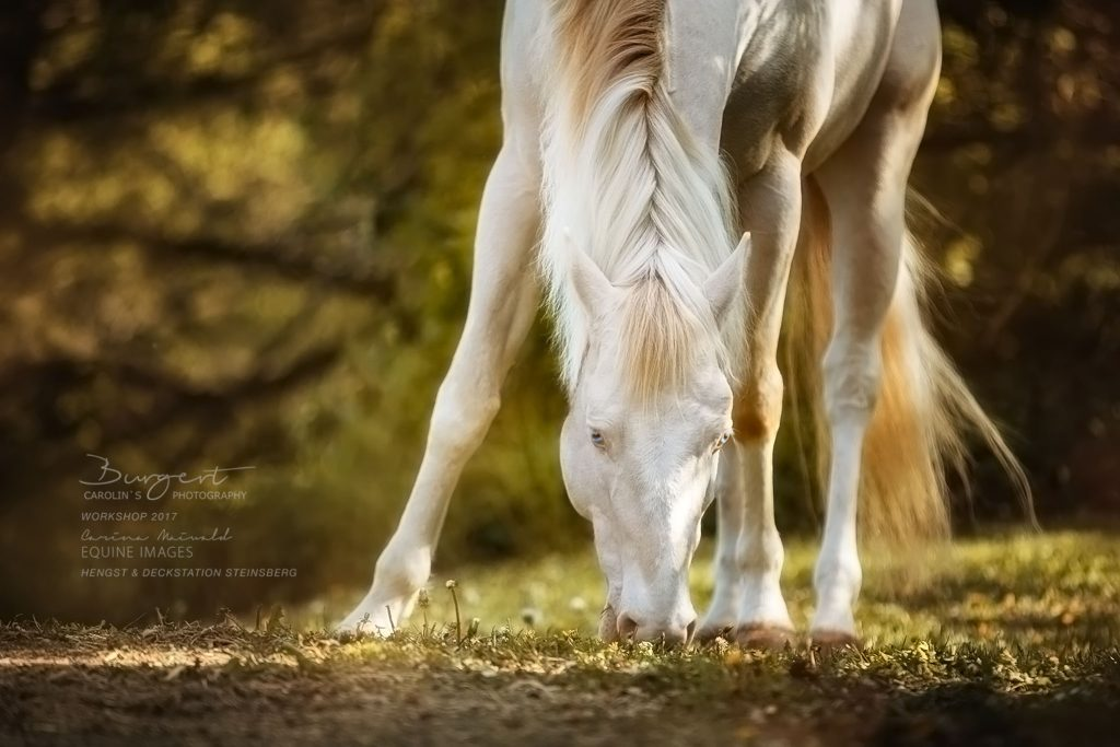 "American Paint Horse ""Magic On Ice"""